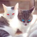 西园里的猫 好妹妹乐队