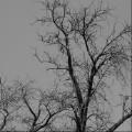 悲伤的力量-飞鸟