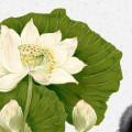 三藏梵音音乐电台03-绿色大地