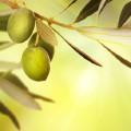 音乐节目12-橄榄树