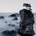 山水之间-王铮亮版