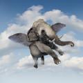 大象の被褥