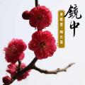 镜中-周云蓬-专辑《镜中》