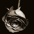 Blak Rose